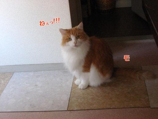 11-1ねぇ!.JPG