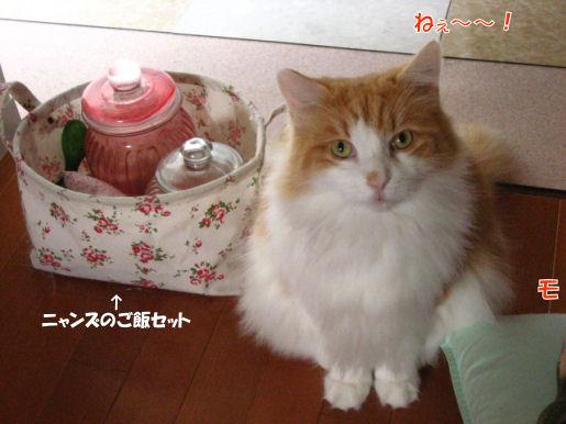 11-5ねぇ~!!.JPG