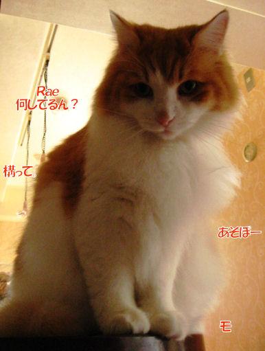 11-5甘えん坊.JPG