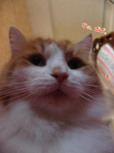 15-3ぽぽ?.JPG