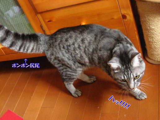15-5ボンボン尻尾.JPG