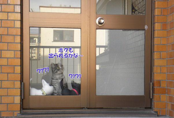 1‐1出られる?.JPG