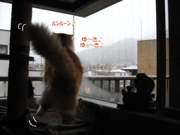 20‐3ゆき~.JPG