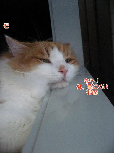 22-5じゃま.JPG