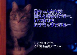23‐2甘えん坊兄.JPG