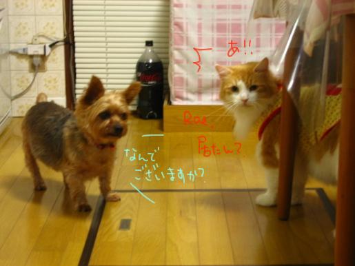 30-1 タローとMonちゃんの会話.JPG