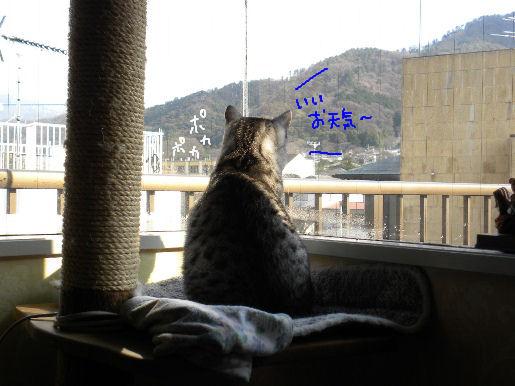 いいお天気.JPG