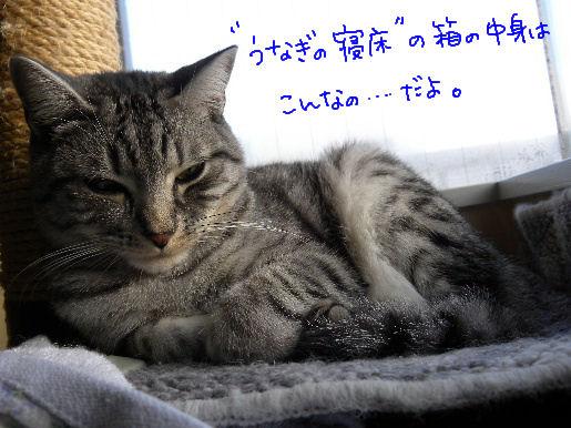 うなぎの寝床の中身.JPG