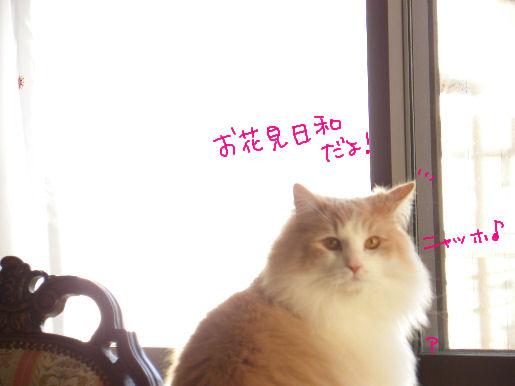 お花見日和.JPG