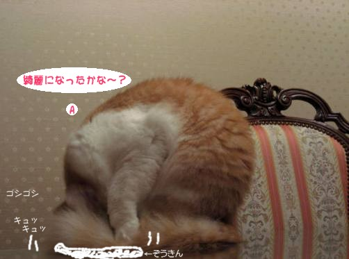 コピー (4) ~ コピー ~ IMG_1503.JPG