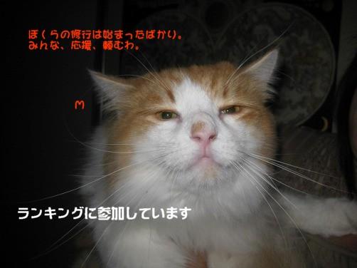 コピー ~ 2-IMG_4372.jpg