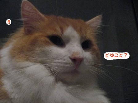 コピー ~ IMG_0086.JPG