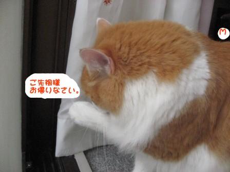 コピー ~ IMG_0616.JPG