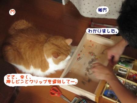 コピー ~ IMG_1109.JPG
