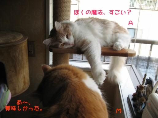 コピー ~ IMG_1120.JPG