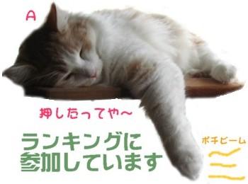 コピー ~ IMG_1151.JPG