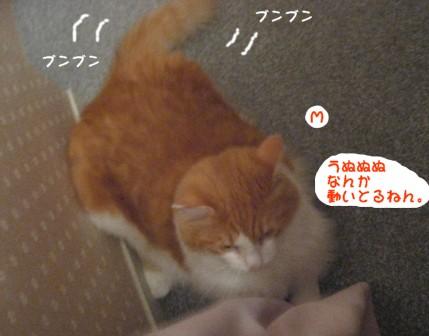 コピー ~ IMG_1217.JPG