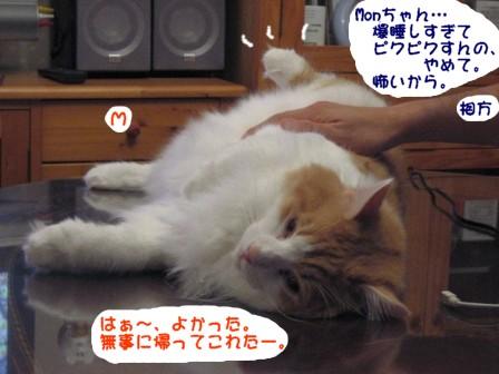 コピー ~ IMG_1285.JPG