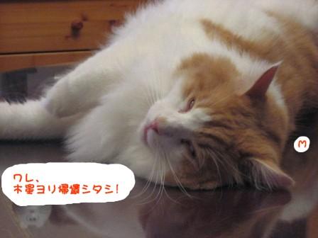 コピー ~ IMG_1290.JPG