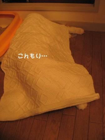 コピー ~ IMG_1303.JPG