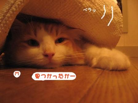 コピー ~ IMG_1304.JPG
