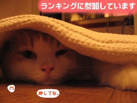 コピー ~ IMG_1305.JPG