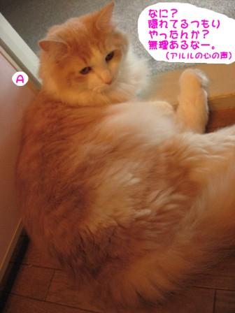 コピー ~ IMG_1308.JPG