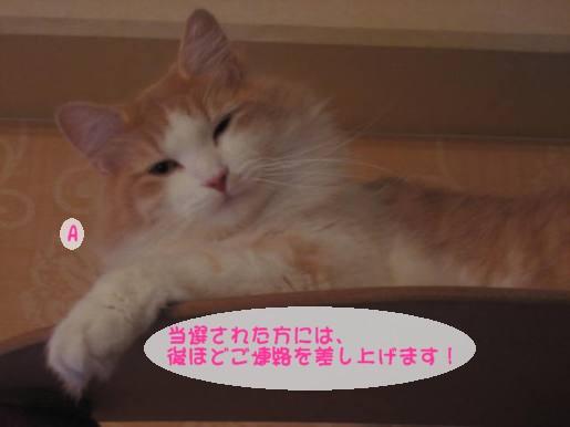 コピー ~ IMG_1661.JPG