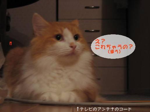 コピー ~ IMG_1674.JPG
