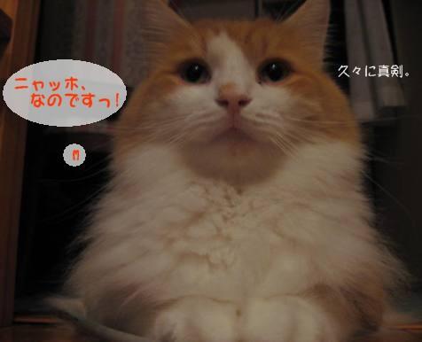 コピー ~ IMG_1678.JPG