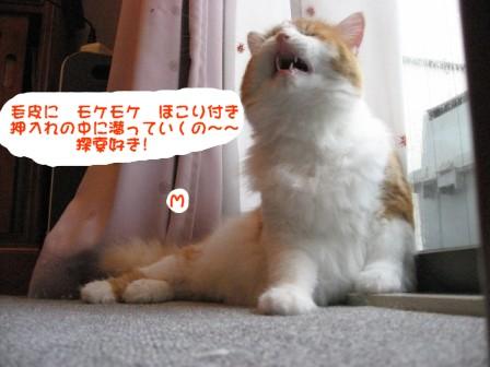 コピー ~ IMG_1831.JPG