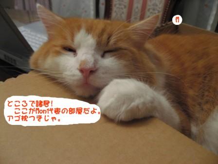 コピー ~ IMG_2308.JPG