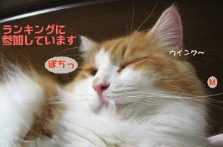コピー ~ IMG_3012.JPG