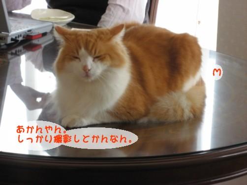 コピー ~ IMG_3026.JPG