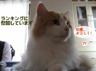 コピー ~ IMG_3030.JPG