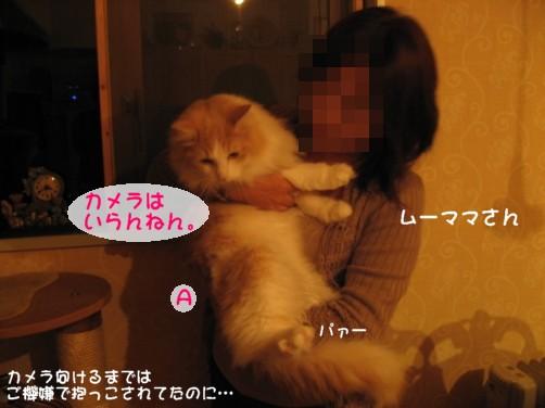 コピー ~ IMG_3039.JPG
