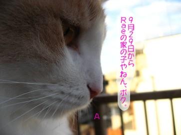 コピー ~ IMG_3743.JPG