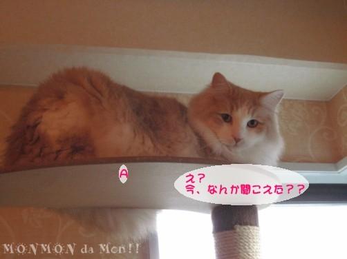 コピー ~ IMG_4036.JPG