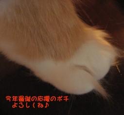 コピー ~ IMG_4042.JPG