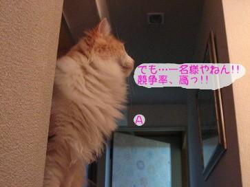 コピー ~ IMG_4173.JPG