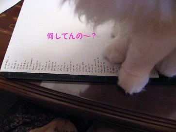コピー ~ IMG_4605.JPG