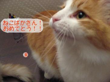 コピー ~ IMG_4635.JPG