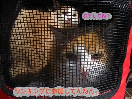 コピー ~ IMG_5548.JPG