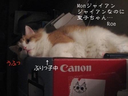 コピー ~ IMG_5726.JPG