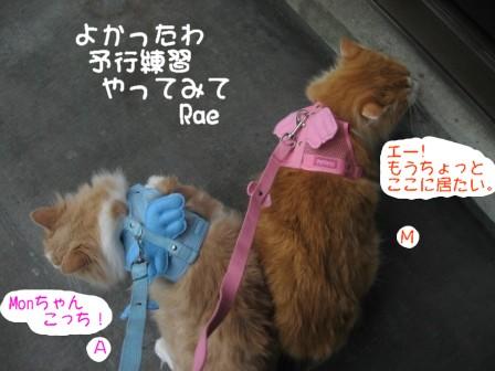 コピー ~ IMG_6345.JPG