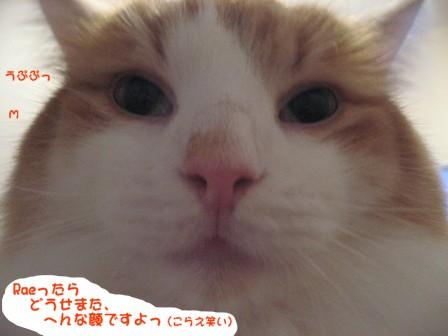 コピー ~ IMG_9023.JPG