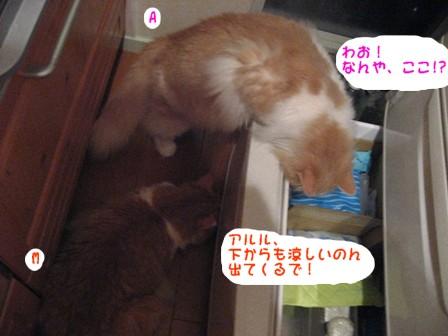 コピー ~ IMG_9819.JPG