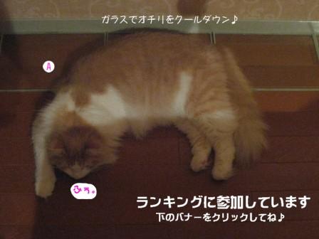 コピー ~ IMG_9864.JPG