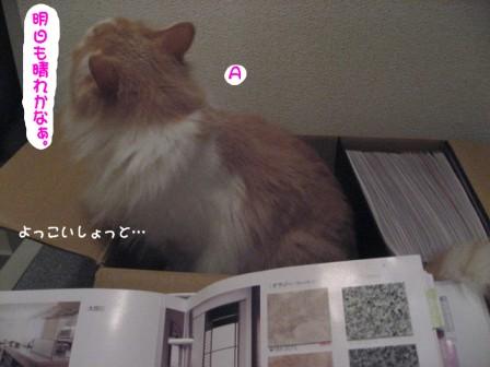 コピー ~ IMG_9935.JPG