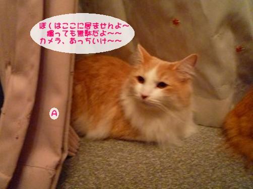 コピー ~ s-025.jpg